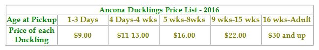 ANCONA DUCKLING PRICES