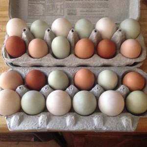 Rockin' H Farm eggs