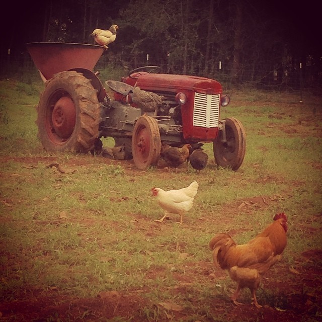 Rockin H Farm Chickens and Tractor